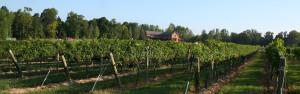 slider-Vineyards