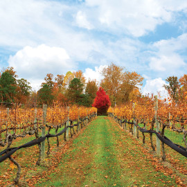 1-Viniterra-vineyard-fall