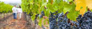 10-vineyard-couple-web